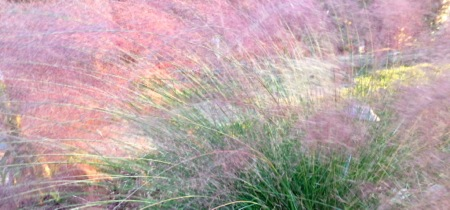 10-10 Blurry Grasses2